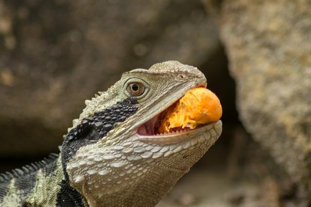 alimento vivo para reptiles