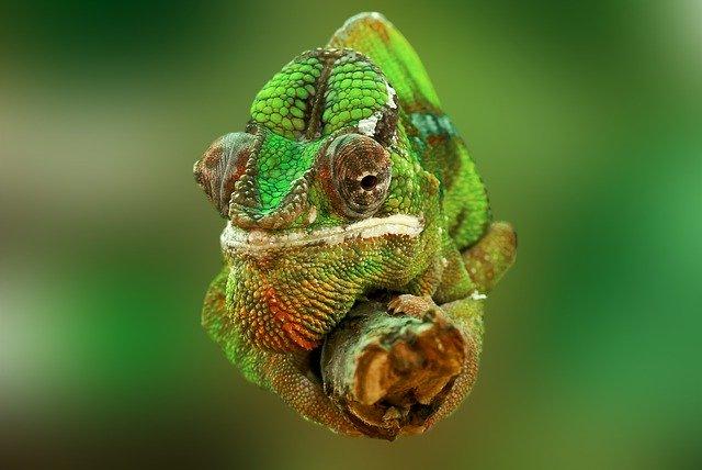 reptiles domesticos