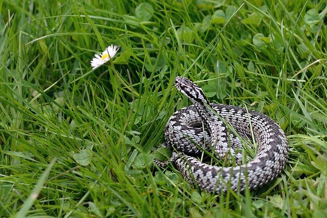 serpiente europa