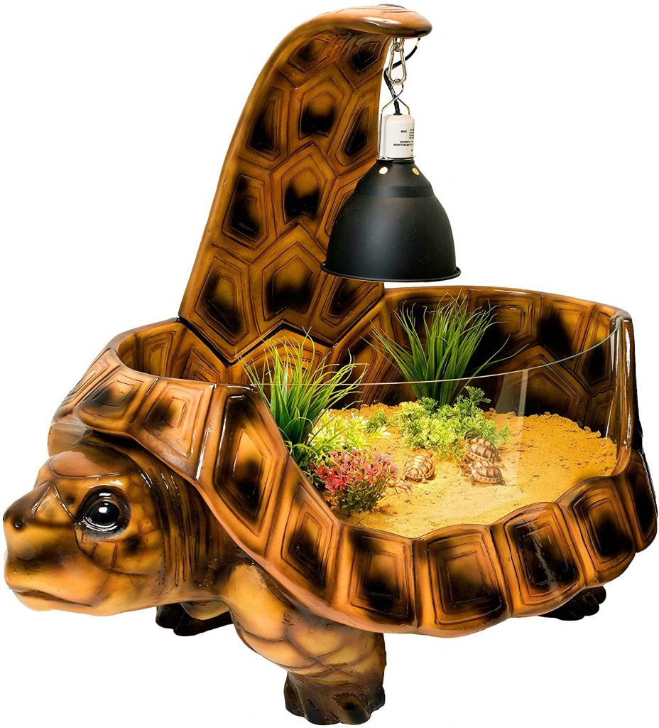 terrario tortuga