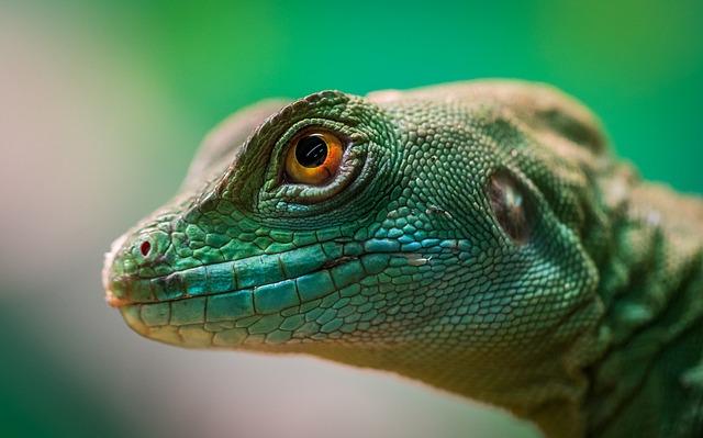 terrarios para reptiles