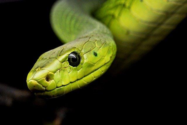 tienda de reptiles