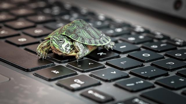 tortuga pequeña de tierra a la venta